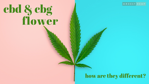 CBD vs CBG Flower - Modest Hemp Co.