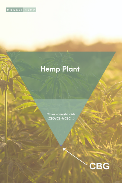 What is CBG - Modest Hemp Co.