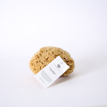HONEYCOMB BODY SEA SPONGE