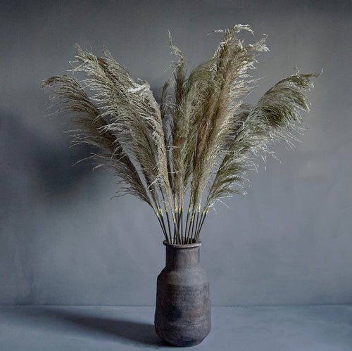 Single pampas grass