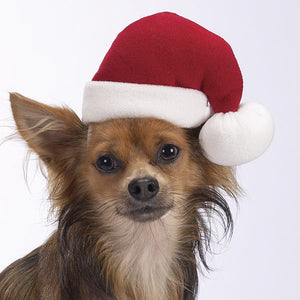 Doggie Santa Hat
