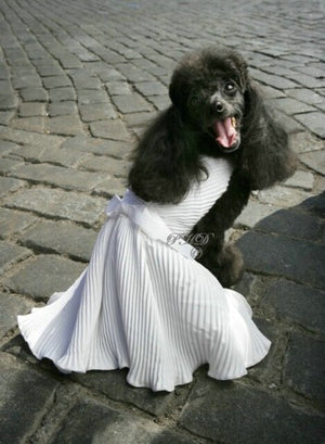 7 Year Dog Dress - Marilyn Monroe Collection