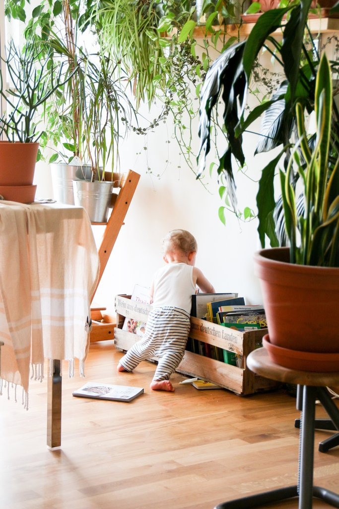 10 Best Indoor Plants For Air Purification