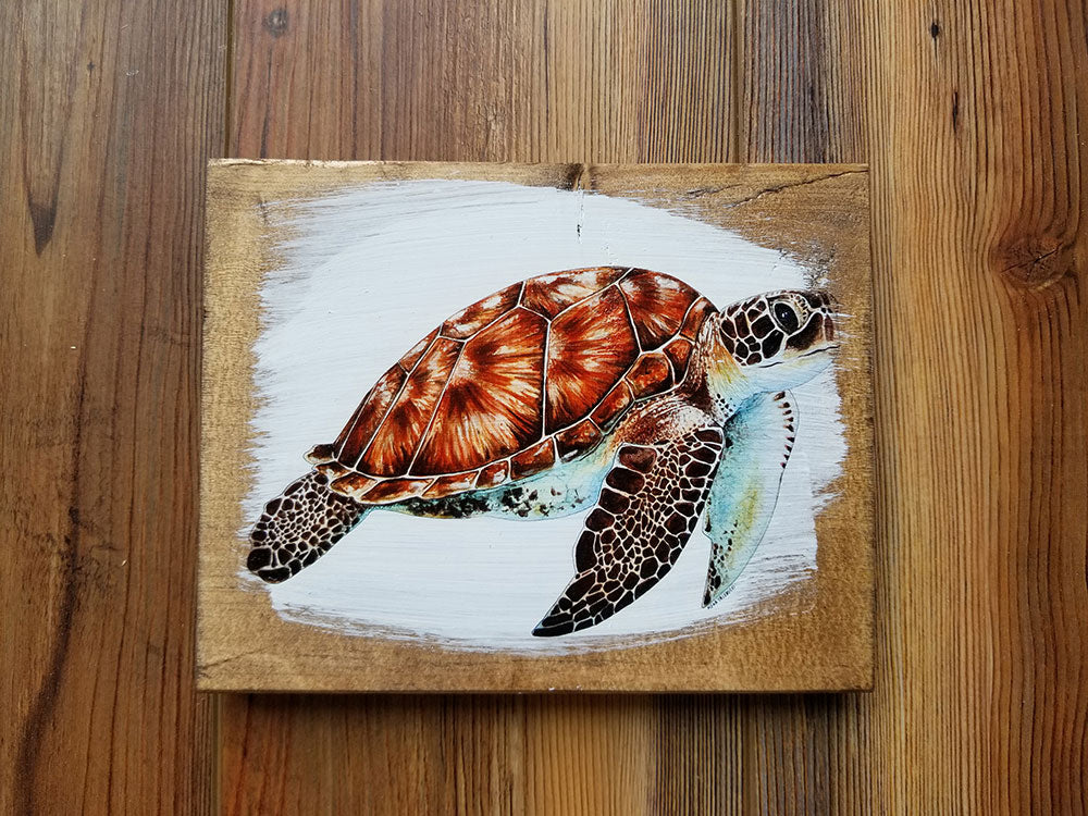 5x7 Turtle Artwork