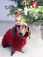 Christmas tips for Dogs