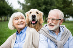 Ageing and Arthritis in Pets
