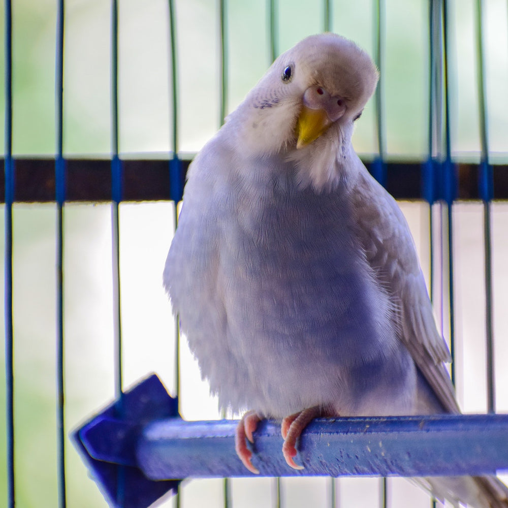 Is your pet bird stressed ...