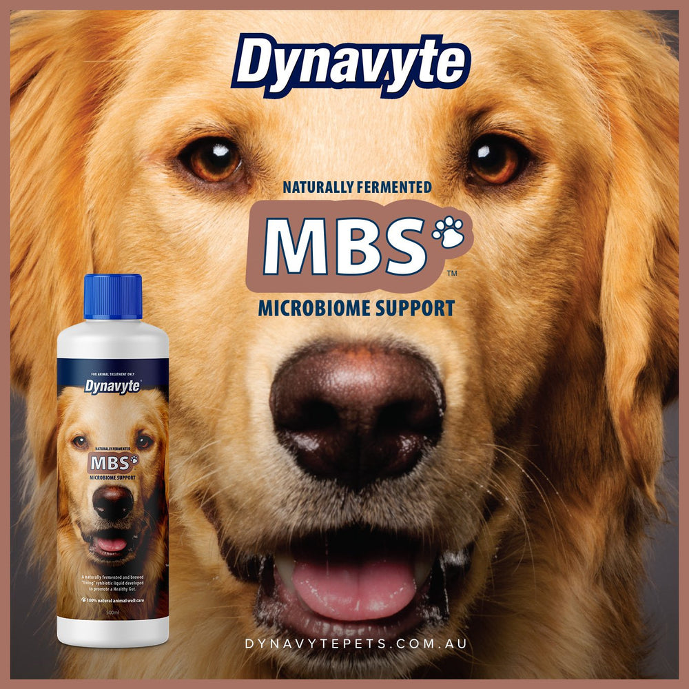 Big House Dog MBS - 500ML