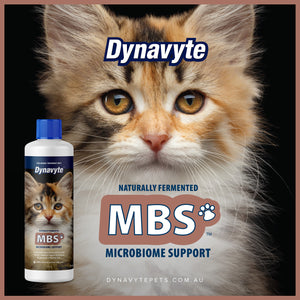 Clever Cat MBS - 250ML