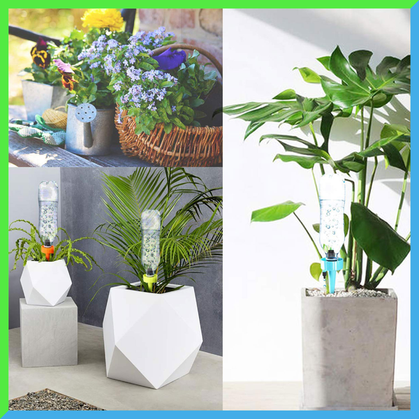 Plant Self Watering Spikes(50% OFF TODAY)