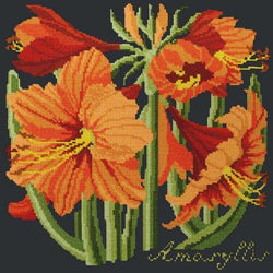 Amaryllis Needlepoint Kit Elizabeth Bradley Design Black
