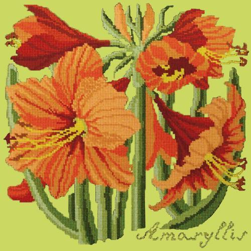 Amaryllis Needlepoint Kit Elizabeth Bradley Design Pale Lime