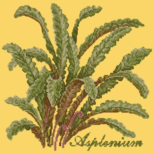 Asplenium Needlepoint Kit Elizabeth Bradley Design Sunflower Yellow