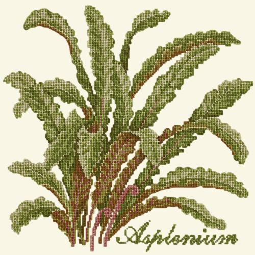 Asplenium Needlepoint Kit Elizabeth Bradley Design Winter White