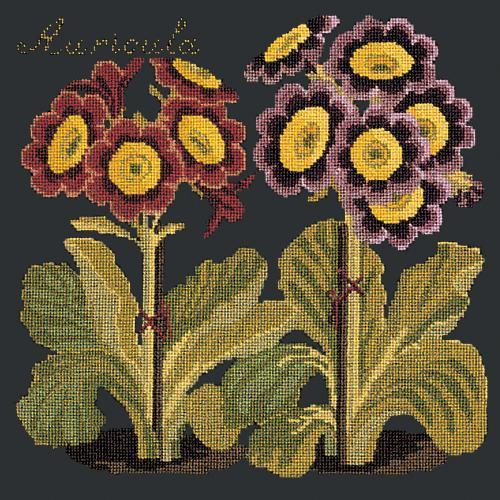 Auricula Needlepoint Kit Elizabeth Bradley Design Black