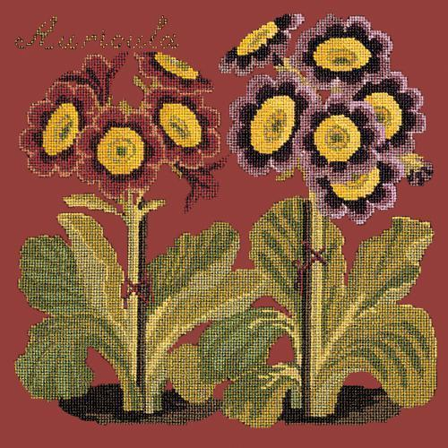 Auricula Needlepoint Kit Elizabeth Bradley Design Dark Red