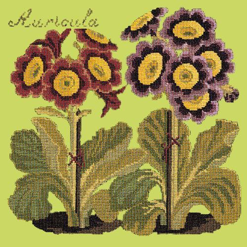 Auricula Needlepoint Kit Elizabeth Bradley Design Pale Lime