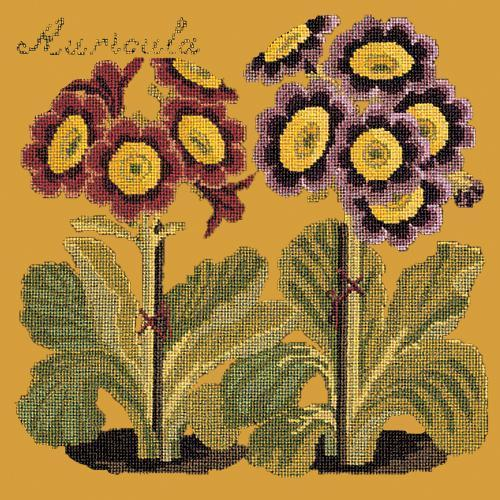 Auricula Needlepoint Kit Elizabeth Bradley Design Yellow