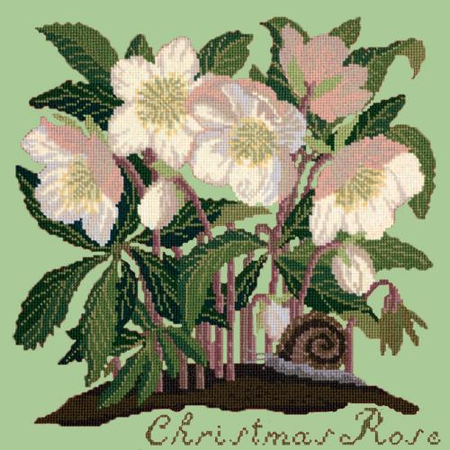 Christmas Rose Needlepoint Kit Elizabeth Bradley Design Pale Green