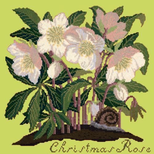 Christmas Rose Needlepoint Kit Elizabeth Bradley Design Pale Lime