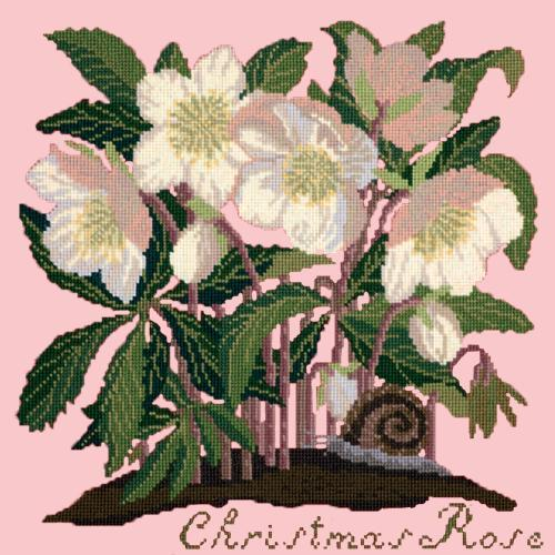 Christmas Rose Needlepoint Kit Elizabeth Bradley Design Pale Rose