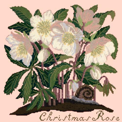 Christmas Rose Needlepoint Kit Elizabeth Bradley Design Salmon Pink