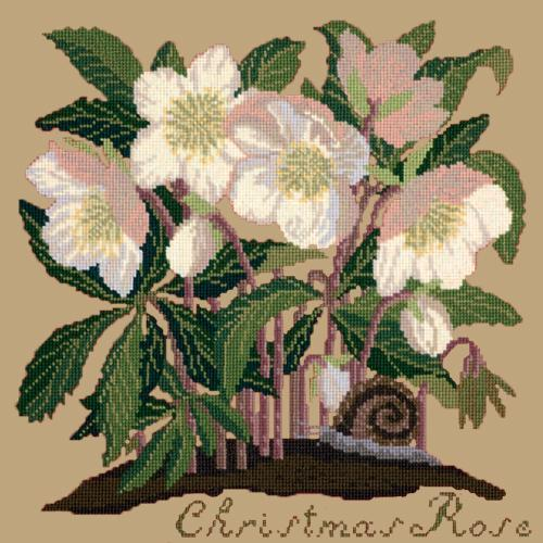 Christmas Rose Needlepoint Kit Elizabeth Bradley Design Sand