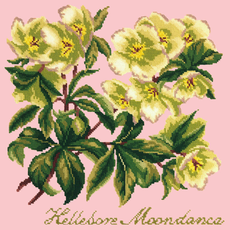 Hellebore Moondance Needlepoint Kit Elizabeth Bradley Design Pale Rose