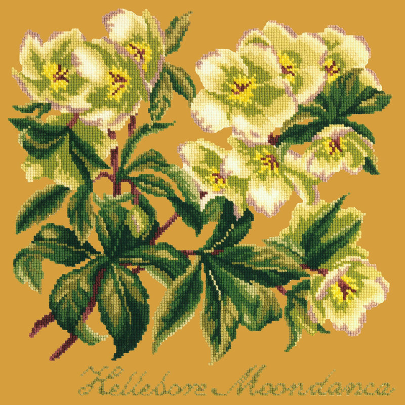Hellebore Moondance Needlepoint Kit Elizabeth Bradley Design Yellow