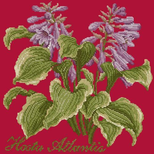 Hosta Atlantis Needlepoint Kit Elizabeth Bradley Design Bright Red