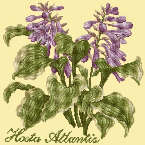 Hosta Atlantis Needlepoint Kit Elizabeth Bradley Design Butter Yellow
