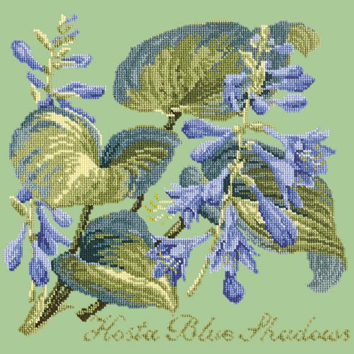 Hosta Blue Shadows Needlepoint Kit Elizabeth Bradley Design Pale Green