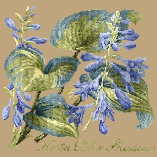 Hosta Blue Shadows Needlepoint Kit Elizabeth Bradley Design Sand