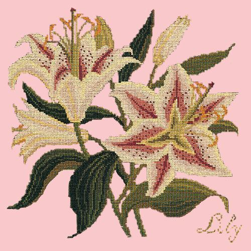 Lily Needlepoint Kit Elizabeth Bradley Design Pale Rose