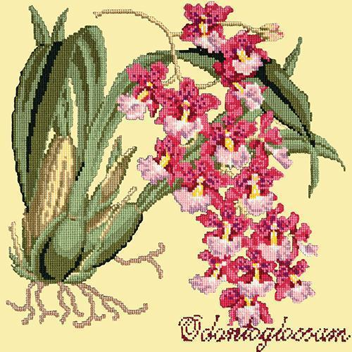 Odontoglossum (Tiger Orchid) Needlepoint Kit Elizabeth Bradley Design Butter Yellow
