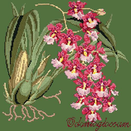 Odontoglossum (Tiger Orchid) Needlepoint Kit Elizabeth Bradley Design Dark Green
