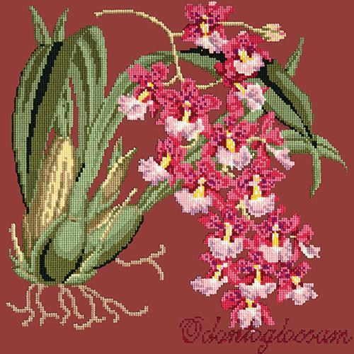Odontoglossum (Tiger Orchid) Needlepoint Kit Elizabeth Bradley Design Dark Red
