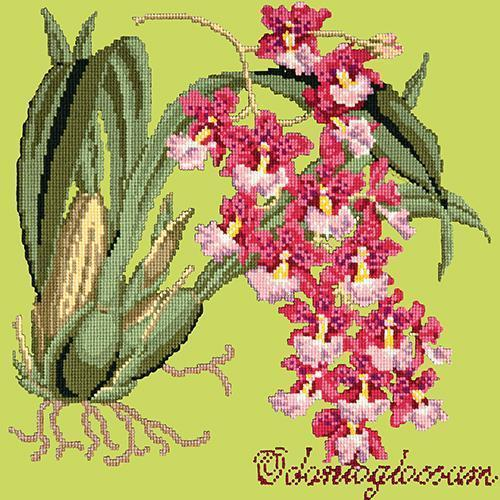 Odontoglossum (Tiger Orchid) Needlepoint Kit Elizabeth Bradley Design Pale Lime