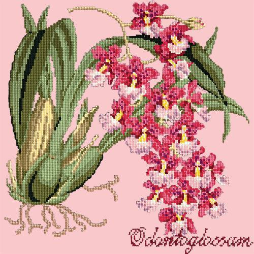 Odontoglossum (Tiger Orchid) Needlepoint Kit Elizabeth Bradley Design Pale Rose