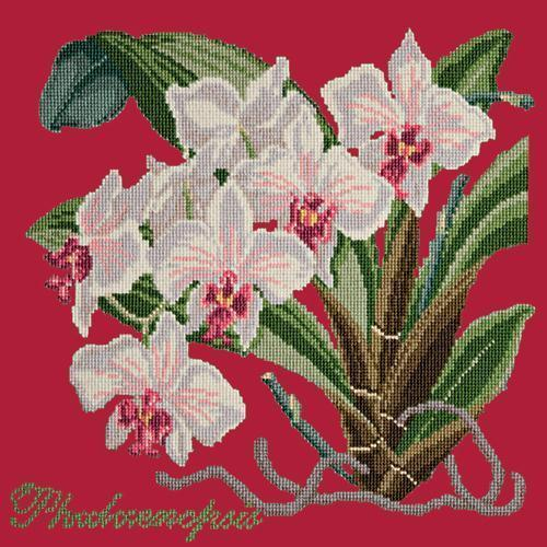 Phalaenopsis (Moth Orchid) Needlepoint Kit Elizabeth Bradley Design Bright Red