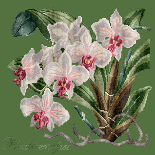 Phalaenopsis (Moth Orchid) Needlepoint Kit Elizabeth Bradley Design Dark Green