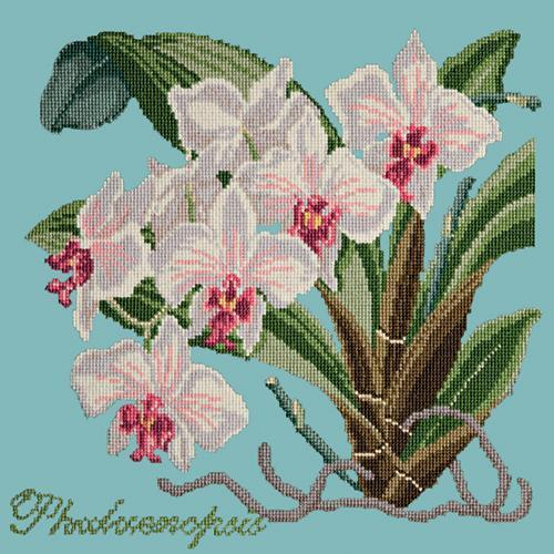 Phalaenopsis (Moth Orchid) Needlepoint Kit Elizabeth Bradley Design Duck Egg Blue