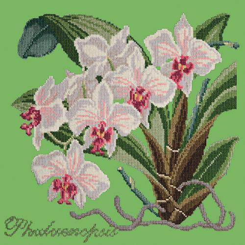 Phalaenopsis (Moth Orchid) Needlepoint Kit Elizabeth Bradley Design Grass Green