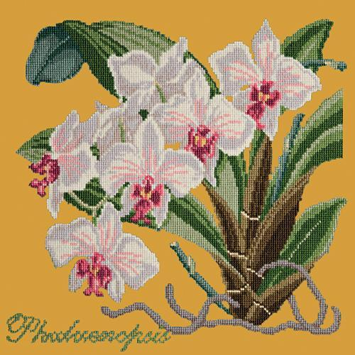 Phalaenopsis (Moth Orchid) Needlepoint Kit Elizabeth Bradley Design Yellow