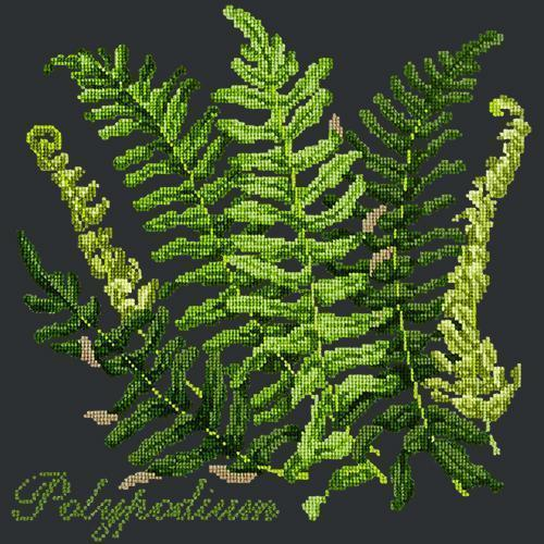 Polypodium Needlepoint Kit Elizabeth Bradley Design Black
