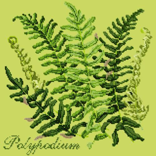 Polypodium Needlepoint Kit Elizabeth Bradley Design Pale Lime