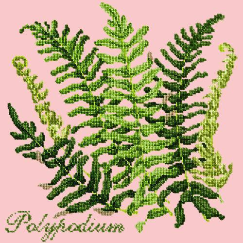 Polypodium Needlepoint Kit Elizabeth Bradley Design Pale Rose