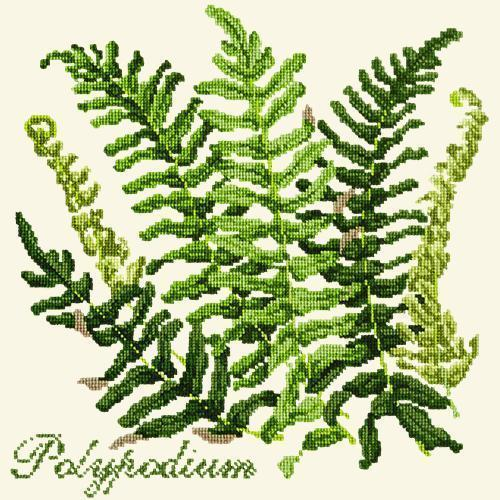 Polypodium Needlepoint Kit Elizabeth Bradley Design Winter White
