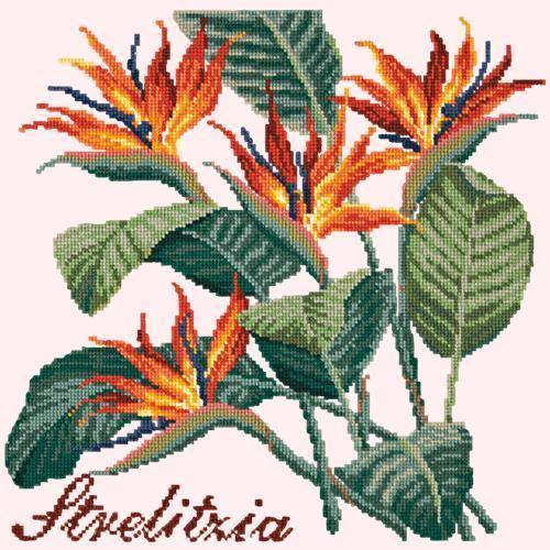 Strelitzia (Bird of Paradise) Needlepoint Kit Elizabeth Bradley Design Cream