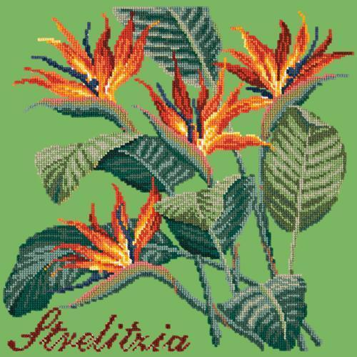 Strelitzia (Bird of Paradise) Needlepoint Kit Elizabeth Bradley Design Grass Green